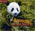 Animals in Danger (Start Reading) (English) (Paperback): Book by Anne Faundez