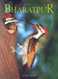 Birds of Bharatpur: Book by Rajpal Singh