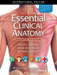 Essential Clinical Anatomy | Book by Keith L  Moore | Best Price in
