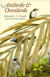 Antbirds and Ovenbirds: Their Lives and Homes: Book by Alexander F. Skutch