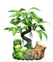 Green Plant Indoor Bamboo Shoot Bonsai