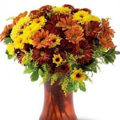 Flora Fields Flower Seeds: Chrysanthemum  Mary Mix