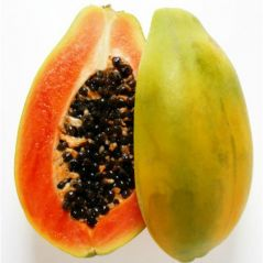 Gift Or Buy Flora Fields Papaya Red Lady Hybrid F1 Seeds