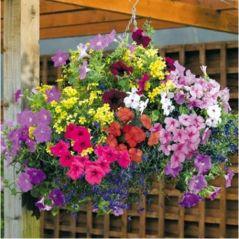 Flora Fields Flower Seeds: Petunia Royal Mix