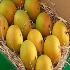 Shop or Gift Fruits Mango - Guaranteed Alphonso A Grade Premium Mangoes Online.