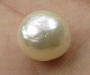 Lab Certified 14.45cts Genuine Keshi Pearl/moti (chandra)