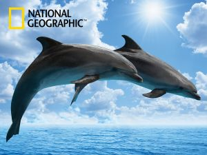 Dolphins 500pc By Prime 3d (code - P3d-10075)