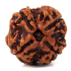4 Mukhi Rudraksha 100 Percent Natural Aaa Top Quality Rudraksha 100 Percent Genuine