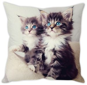 Stybuzz Blue Eyed Kittens Cushion Cover