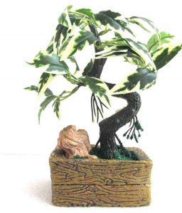 Green Plant Indoor Bonsai