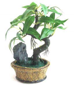 Indoor Plants Buy indoor plants Online at Best Price in India