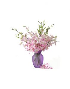 Gifts Valley 12 White And Pink Orchids In A Glass Vase Gift Items