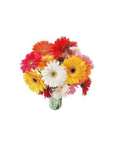 Gifts Valley All Color Gerbera Gift Items
