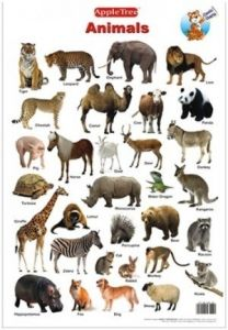 Apple Tree Animals Preschool Charts - 1 ( 13.5 Inch * 19.5 Inch) Wall Chart