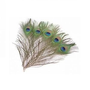 Naturally Beautiful Mor Pankh / Peacock Feather For Pooja - 5 PCs