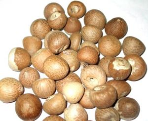 Best Quality Puja Supari Betal Nut 21 PCs