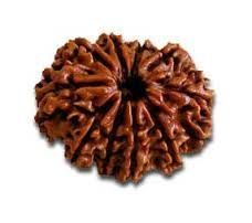 Natural Rudraksha 10 Ten Mukhi (face)lab Certified