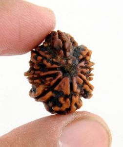Barishh 21mm Ten Mukhi Natural Holy Rudraksha Bead - Br-3465