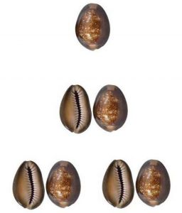 Faith & Beliefs - Ever Forever Very Rare Natural Brown Cowrie/Bhuri Kaudi - ( Code - Brown Cowrie )