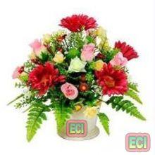 Купить цветы индия доставка цветов на дом кострома