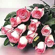 Pink Roses Bunch Express Service