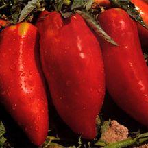 Buy Tomato Pyramid online