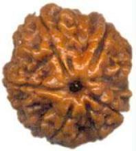 Buy Premium Panch Mukhi Rudraksha Bead online