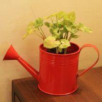 Buy Simpler And Sober Planter online