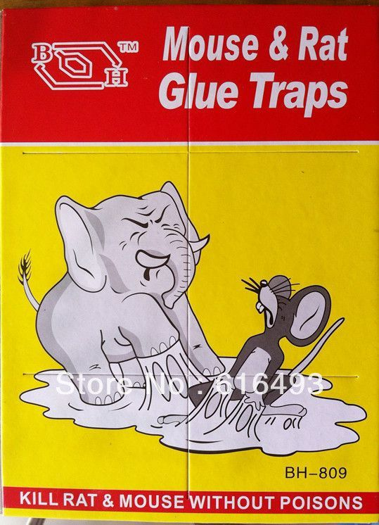 Buy Buy 1 Get 1 Free Mouse Glue Pad - Kill Rat & Mouse Without Poisons online