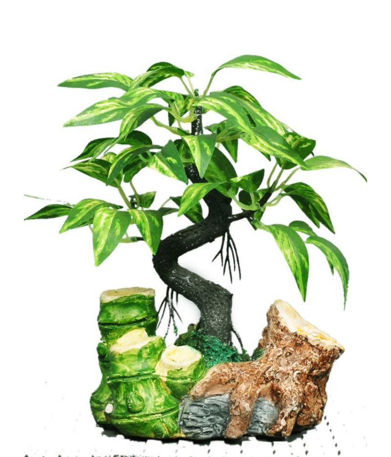Buy Green Plant Indoor Bamboo Shoot Bonsai Online