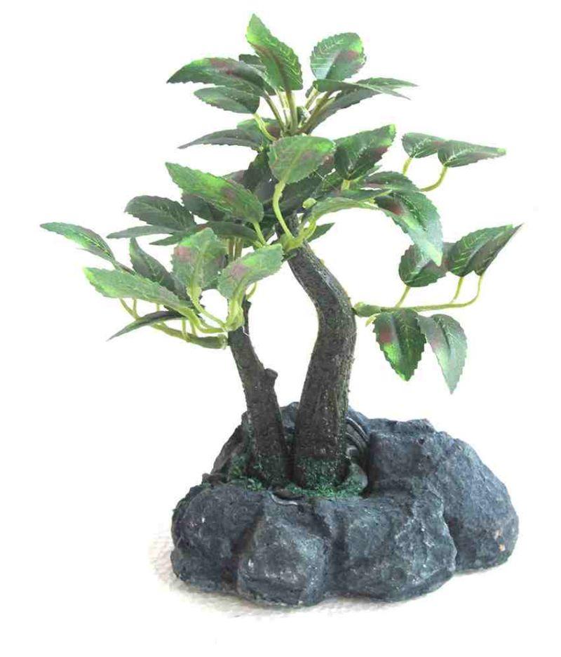 Buy Green Plant Indoor Bonsai online