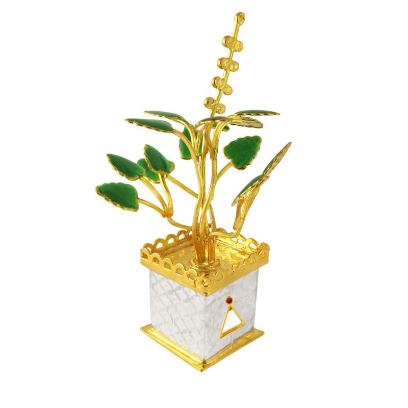 Tulsi Plant Images Golden Tulsi Silver Plant