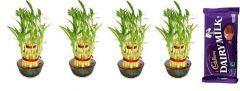 2 Layer Lucky Bamboo Plants (Set Of 4 PCS)